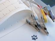 Εγκεφαλικό επεισόδιο στο σκύλο και στη γάτα