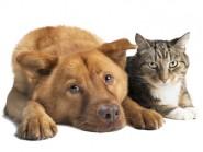 Στείρωση σκύλου και γάτας