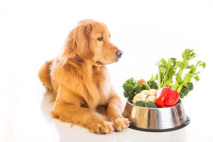 Σπιτικό φαγητό για τα κατοικίδια ζώα