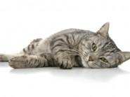 Νόσος από νυχιές γάτας