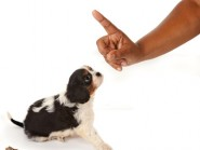 Προβλήματα στη συμπεριφορά ούρησης και αφόδευσης του σκύλου