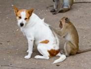 Ψύλλοι στο σκύλο και στη γάτα