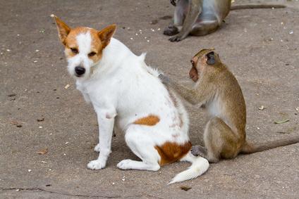 eed2867e7c36 Τροφική αλλεργία και δυσανεξία στο σκύλο και στη γάτα - vetmenow.gr