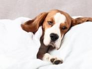 Επιληπτικές κρίσεις στο σκύλο και στη γάτα