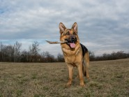 Αλλοτριοφαγία και Κοπροφαγία στο σκύλο και στη γάτα
