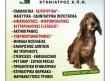 Κλινική Μικρών Ζώων Χρήστος Μπίτζας