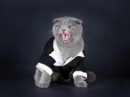 Πώς να αποφύγετε τις γρατζουνίες από τη γάτα