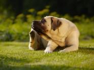 Ατοπική δερματίτιδα στο σκύλο και στη γάτα