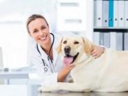 Ο σκύλος μου έχει λιπώματα – Τι πρέπει να κάνω;