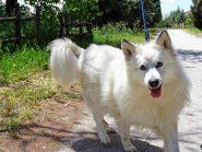 Ιάσονας, ο πιο όμορφος σκύλος του κόσμου, ψάχνει οικογένεια.