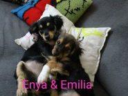 Οι μικρούλες Enya κ Emilia ψάχνουν σπιτάκι