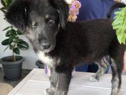 Η Olia, το σκυλάκι με το 1 ματάκι, ψάχνει οικογένεια