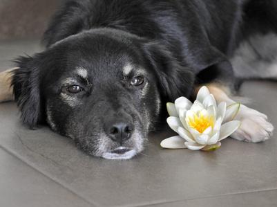 Ο καρκίνος στο σκύλο και στη γάτα - Απαντήσεις