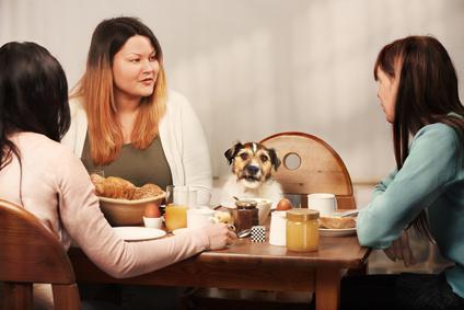 Τροφική αλλεργία και δυσανεξία στο σκύλο και στη γάτα