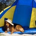 Ηλιακά εγκαύματα στο σκύλο και στη γάτα