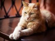 Χρησιμοποιήστε τη σωστή αμπούλα – μη δηλητηριάζετε τη γάτα σας