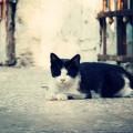 Ουρολιθίαση στις γάτες