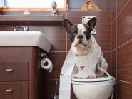 Πόσο συχνά ουρεί ο σκύλος σας;