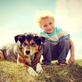 """Ψευδοκύηση του σκύλου, γωνστή και ως """"ανεμογκάστρι"""""""