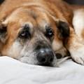 Οστεοαρθρίτιδα στο σκύλο και στη γάτα