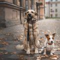 Μελέτη για την ασφάλεια των αντιεπιληπτικών στην κτηνιατρική.