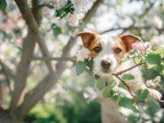 Τα συχνότερα αίτια απώλειας τριχώματος στο σκύλο.